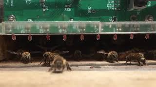 Monitoring fanning behavior w/ custom sensor array