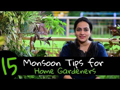 15 Monsoon Tips for Home Gardeners | Gardening in rains | Gardening Tips