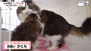 Vol.52「にゃん旅鉄道」新人教育にゃ!