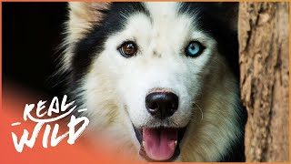 Lost And Found, Litter Of Puppies | For The Love Of Dogs | Wild Things Documentary