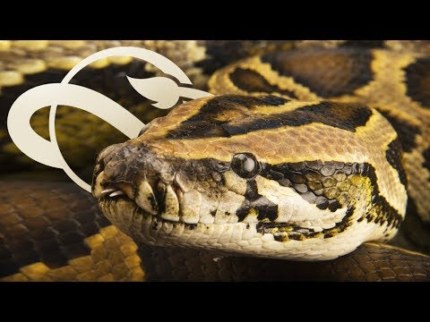 SNAKES Confirmed In Planet Zoo! Pythons! | Planet Zoo Update