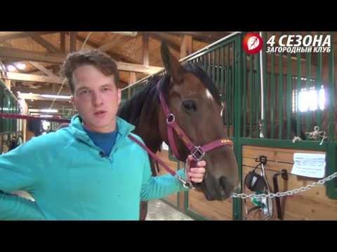Детский конный спорт в конно-спортивном клубе