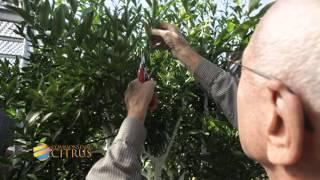 Commonsense Citrus