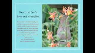 PNW Native Plants for the Garden