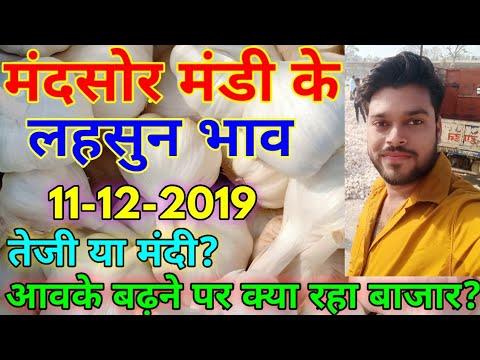 Garlic Rate Today : Mandsor Mandi Garlic Rate Today : Mandsor Mandi Lahsun Bhav Aaj Ka : Lahsun Bhav