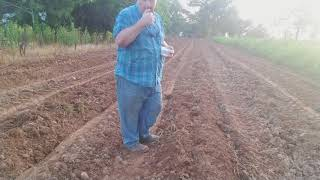 How to plant pumpkins.
