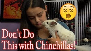 Dangers to Chinchillas | The DON'Ts of Chinchilla Care