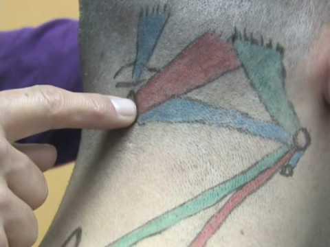 Les récepteurs dans les tendons et les muscles