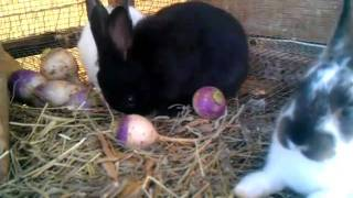 Feed For Meat Rabbits. What I Feed & Why.