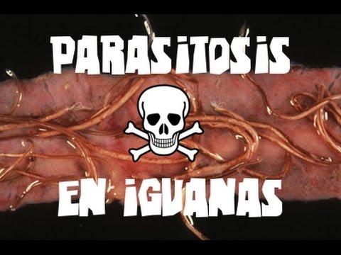 Female parasitiko para sa mga kalalakihan