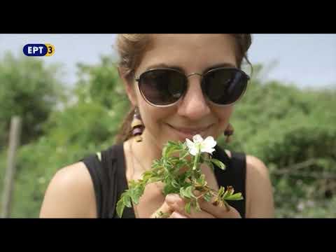 Βότανα, καρποί της γης – «Στην Ορεινή Χαλκιδική» | 04/07/2017 | ΕΡΤ