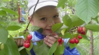 29. Почему нельзя делать летнюю и осеннюю обрезку плодовых деревьев!
