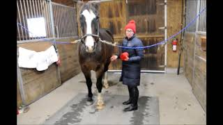 Gillian's Tip of the Week: Bandaging Series
