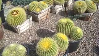 B&B Cactus Farm in Tucson, AZ