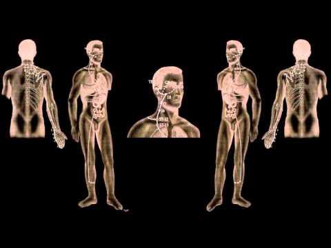 Esercizi di Kegel per la prostata e la potenza
