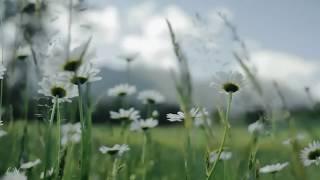 П.И. Чайковский - «Июнь Баркарола» - Тchaikovsky - The Seasons – «Barcarolle  June»