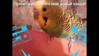 Подпишитесь на мой новый канал Арчика )))
