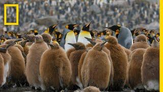 Go Inside an Antarctic