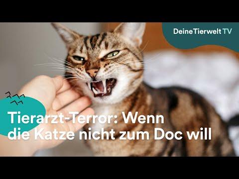 Tierarzt-Terror: Wenn die Katze nicht zum Doc will