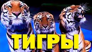Галилео. Тигры