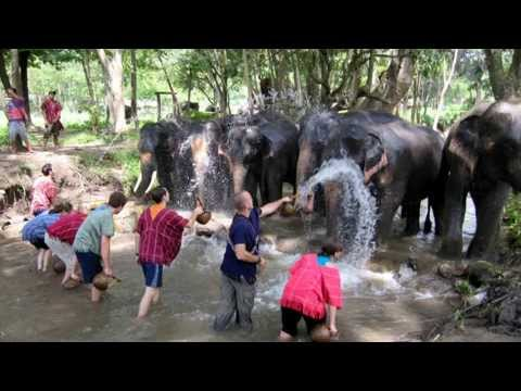 Elephant Owner for the Day at Patara Elephant Farm - Chiang Mai, Thailand