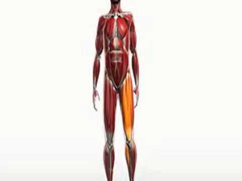 Die Operation nach der Abtragung des Kernes auf dem Daumen des Beines pensa