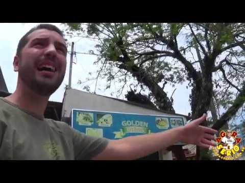 Beto Gregorini fala sobre o corte da árvore do Centro da Cidade