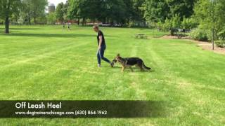 Dog Training: 6 Month Old German Shepherd, Mocha! Before and After Two Week Board and Train