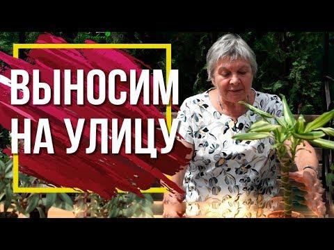 Выносить ли комнатные растения Летом на улицу 🌺