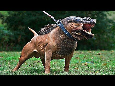 10 Необычных Гибридов Животных в Существование Которых Сложно Поверить