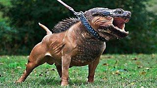 10 Необычных Гибридов Животных, в Существование Которых Сложно Поверить