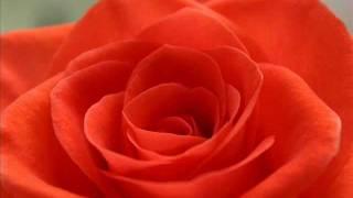 One Million Roses (Soviet Songs in English) - Миллион алых роз (на англ. языке)