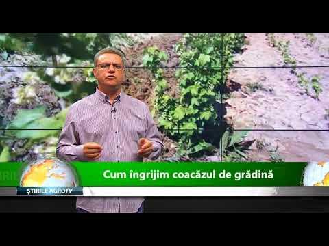 Verucă plantară ars azot