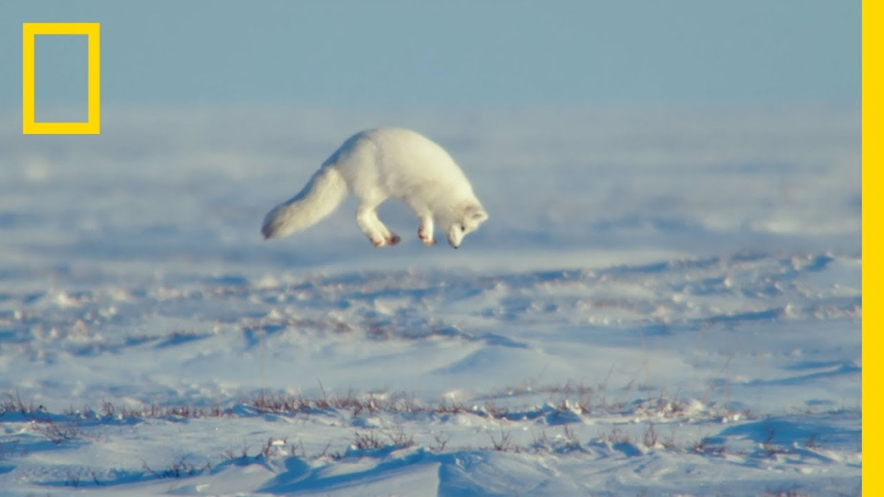 The Unsung Heroes of the Arctic – Ep. 3   Wildlife: The Big Freeze