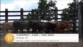 31 BEZERROS CRUZ. INDUS