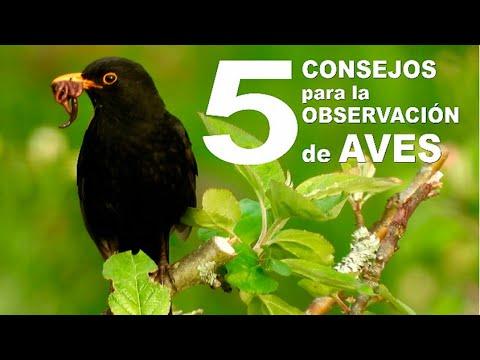 Prueba estos 5 consejos para observar y grabar aves