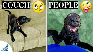Your Complete Guide To Teach Your Dog To STOP Jumping Up