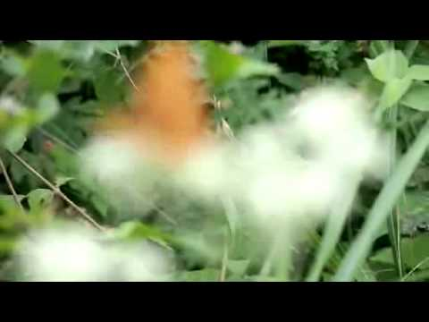 E-PL3動画テスト75-300 メスグロヒョウモン