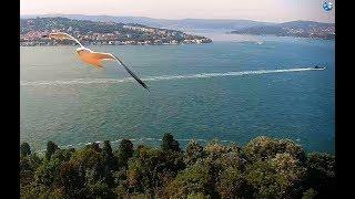 Субмарины ВМФ России и ВМС Турции уже в Черном море Бац! И они встречаются в водах Сочи :) ?!