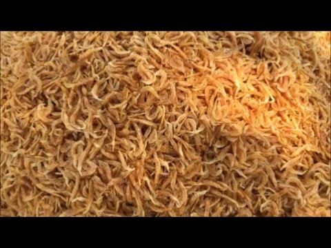 Cooking Pasta for 50 People - Cooking Spicy Pasta with Dry Shrimps - Cooking Pasta in Our Village
