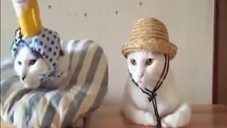 Смотреть видео приколы с котами 70