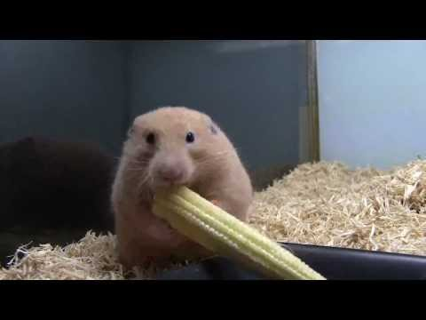 Come togliere cipolle di vermi