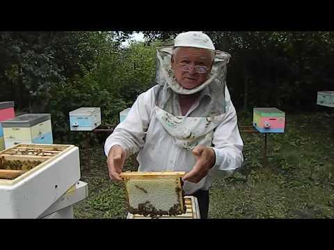 Пчеловодство.Работа с Нуклексом на пасеке Измайлова.