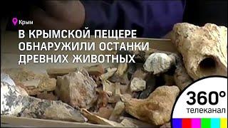 В крымской пещере обнаружили останки древнего жирафа, дикобраза и слона