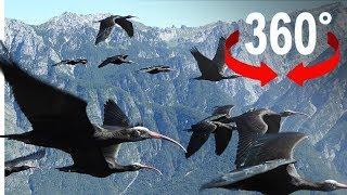 Fliege mit Vögeln über den Bodensee I 360-Grad-Video
