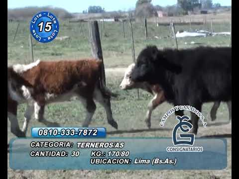Lote M Y H - Lima Bs As