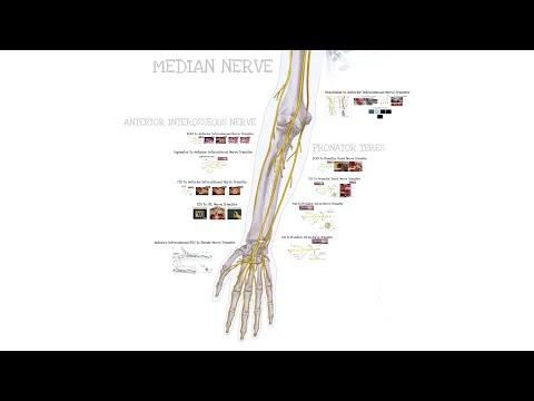 Przeniesienie (transfer) nerwu z powodu urazów nerwu pośrodkowego
