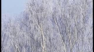Густой туман окутал Первоуральск