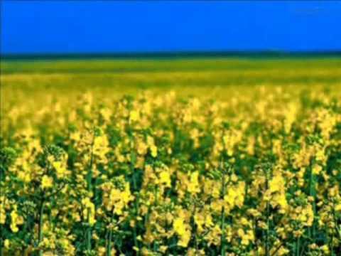 Primavera - Tim Maia