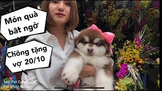 Món quà 20/10 siêu bất ngờ làm Vợ vui gần khóc - Mật Pet Family